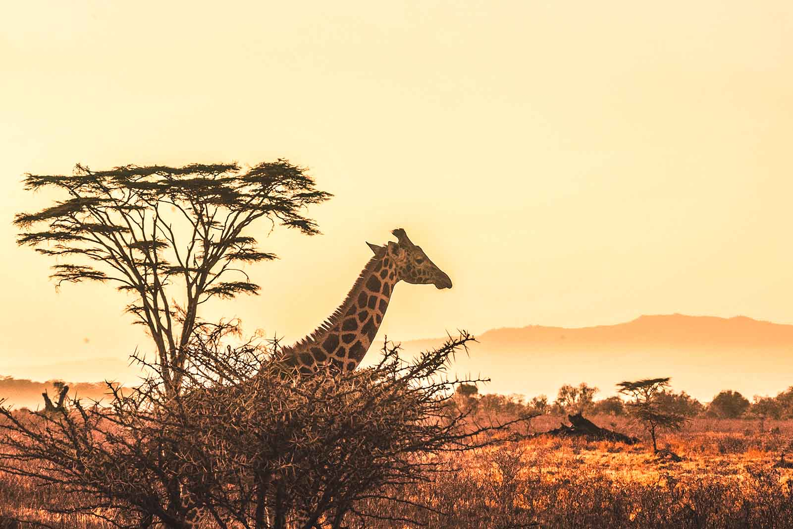 4 Must-Dos When Travelling to a Malaria-Risk Country